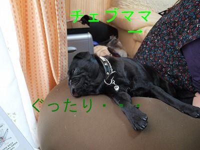 s-2009_0411hime0057.jpg