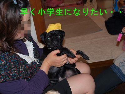 s-2009_0411hime0065.jpg