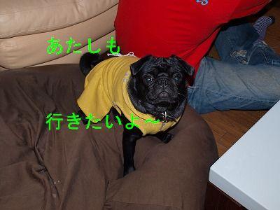s-2009_0411hime0067.jpg