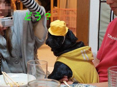 s-2009_0411hime0078.jpg