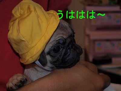 s-2009_0411hime0096.jpg