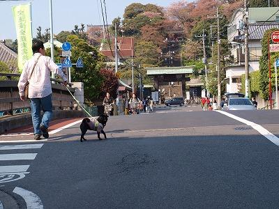 s-2009_0414hime0022.jpg