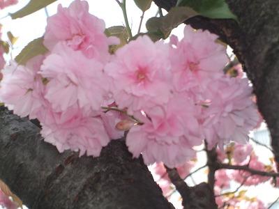 s-2009_0416hime0001.jpg