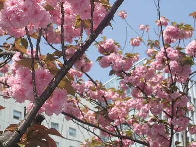 s-2009_0416hime0004.jpg