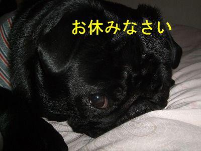 s-2009_0417hime0006.jpg