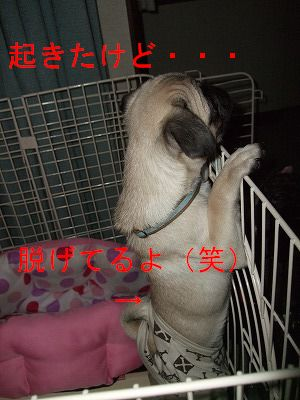 s-2009_0516hime0026.jpg
