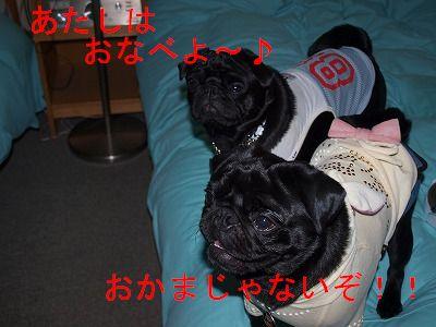 s-2009_0517hime0077.jpg