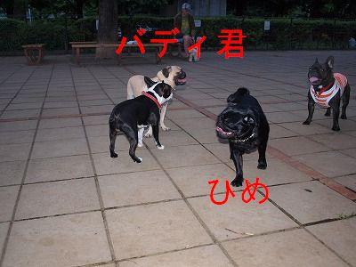s-2009_0602hime0008.jpg