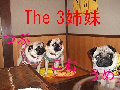 s-2009_0621hime0010.jpg