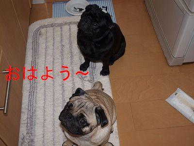 s-2009_0814hime0043.jpg