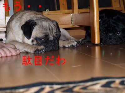 s-2009_0814hime0046.jpg