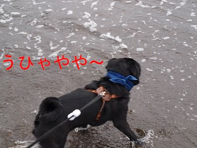 s-2009_0814hime0048.jpg