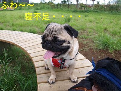 s-2009_0814hime0079.jpg