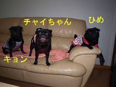 s-2009_0816hime0018.jpg