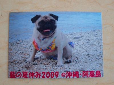 s-2009_0816hime0031.jpg