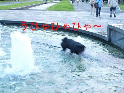 s-2009_0822hime0026.jpg