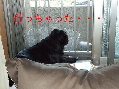 s-2009_0828hime0010.jpg