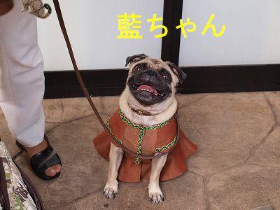 s-2009_0926hime0003.jpg