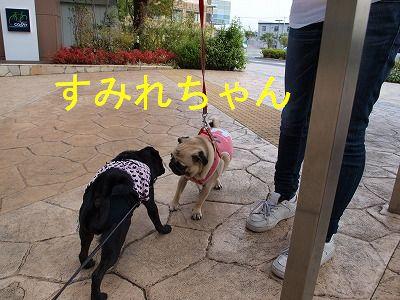 s-2009_0926hime0014.jpg