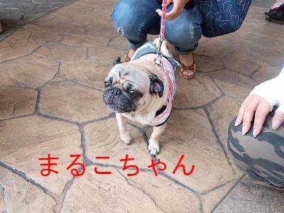 s-2009_0926hime0032.jpg