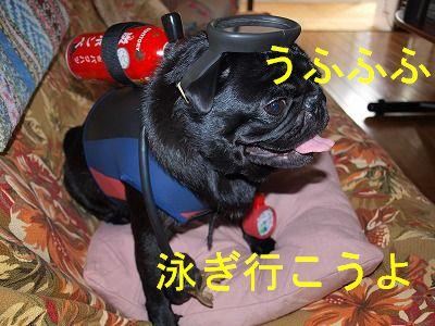 s-2009_0926hime0076.jpg