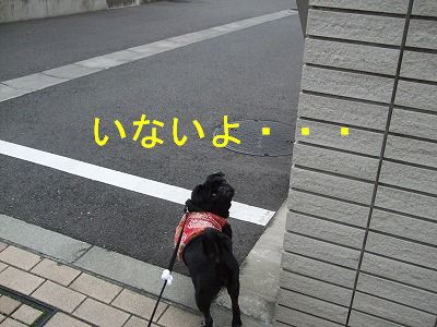 s-2009_1009hime0007.jpg