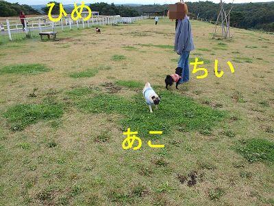 s-2009_1012hime0085.jpg