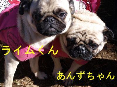 s-2009_1103hime0044.jpg