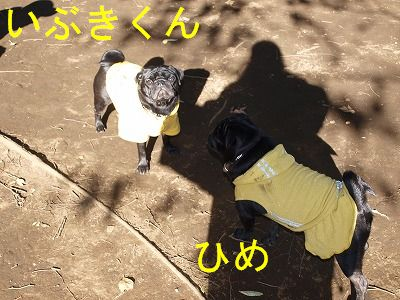 s-2009_1103hime0064.jpg