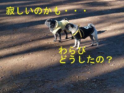 s-2009_1103hime0076.jpg