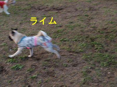 s-2009_1108hime0095.jpg