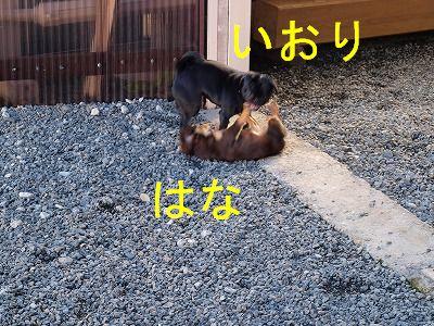 s-2009_11230065.jpg
