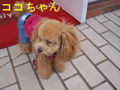 s-2009_11290013.jpg