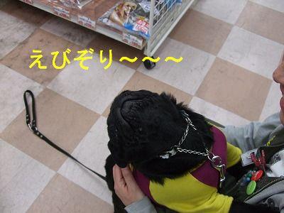 s-2009_12100008.jpg