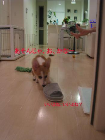 IMG_5107_convert_20080719231528.jpg