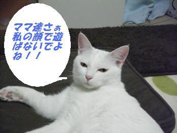 DSCF6159_convert_20090227204417 2