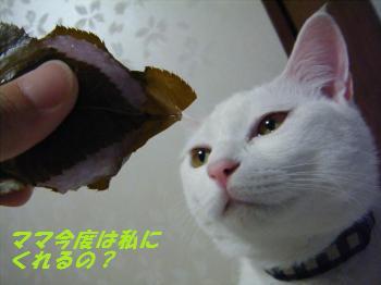 DSCF9646_convert_20090303210444 2