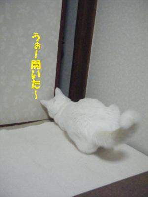 DSCF0051_convert_2009070821530612.jpg