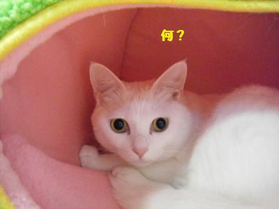 DSCF0333_convert_20100131192752.jpg
