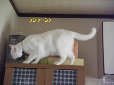 DSCF0683_convert_20090928221337.jpg
