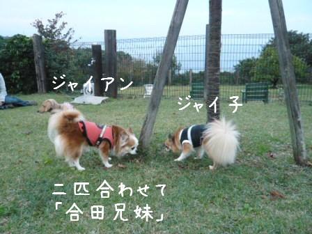 2008-11-02-12.jpg