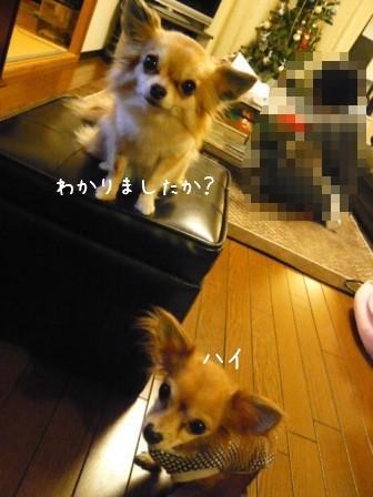 2008-11-28-03.jpg