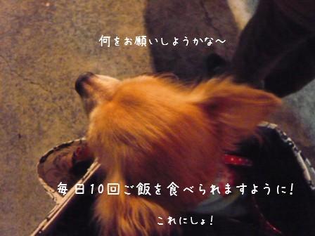 2009-01-01-02.jpg