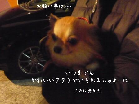 2009-01-01-03.jpg