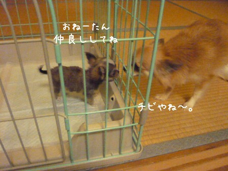 2009-01-07-04.jpg