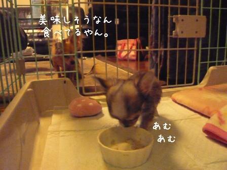 2009-01-07-05.jpg