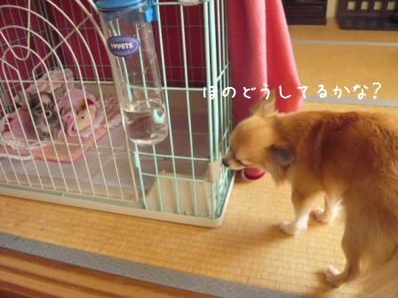2009-01-11-04.jpg