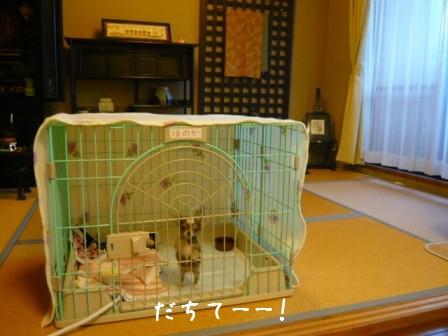 2009-01-16-01.jpg