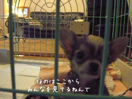 2009-01-16-03.jpg
