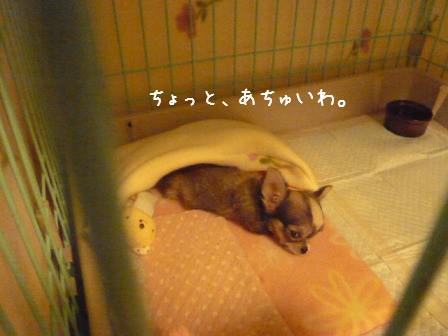 2009-01-16-07.jpg